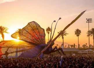 Coachella and Bonnaroo