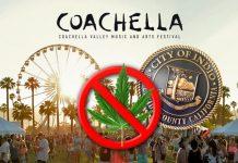 coachella marijuana